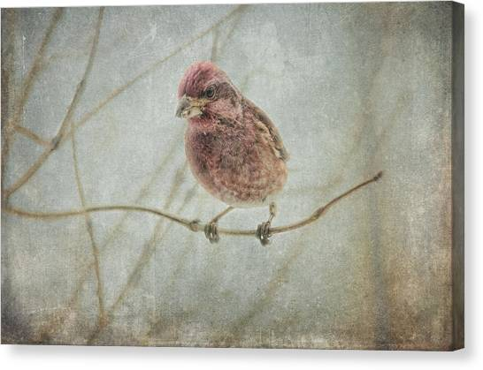 Finches Canvas Print - Early Spring Visitor by Susan Capuano