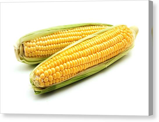 Vegetables Canvas Print - Ears Of Maize by Fabrizio Troiani