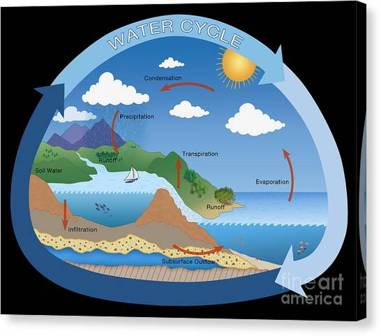 Information Graphics Canvas Print - Earths Water Cycle by Monica Schroeder