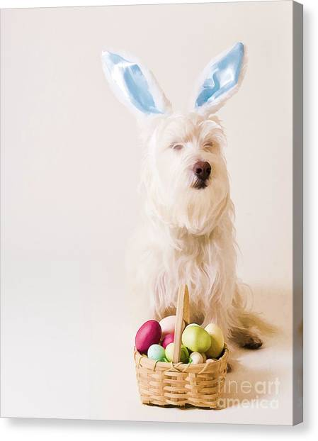Easter Bunny Canvas Print - Easter Bunny Westie by Edward Fielding