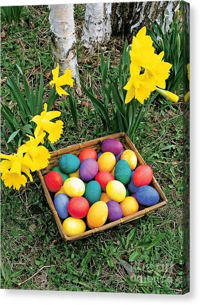Easter Baskets Canvas Print - Easter Eggs And Daffodils by Michael P Gadomski