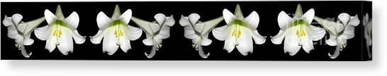 Canvas Print featuring the photograph Easter Lilies Panorama by Rose Santuci-Sofranko
