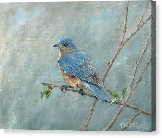 Bluebirds Canvas Print - Eastern Bluebird by Dreyer Wildlife Print Collections