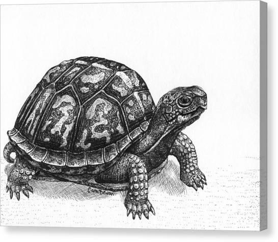 Box Turtles Canvas Print - Eastern Box Turtle by Cara Bevan