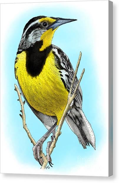Meadowlarks Canvas Print - Eastern Meadowlark by Roger Hall