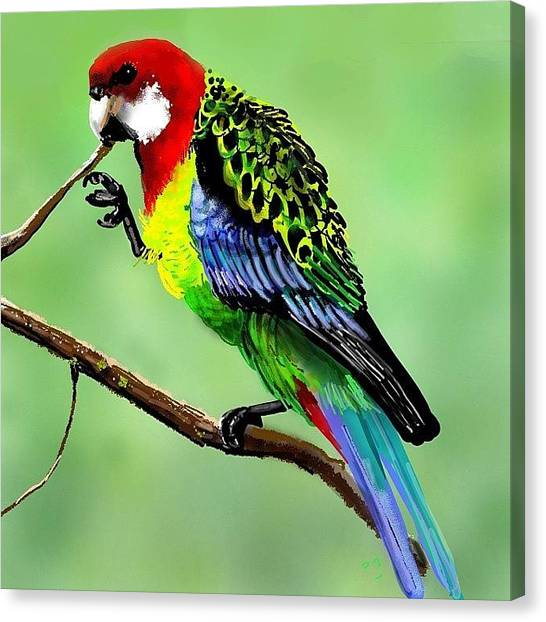 Parrots Canvas Print - #easternrosella #parrot by David Burles