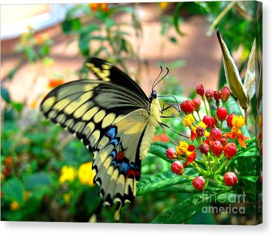 Eating On The Fly Canvas Print