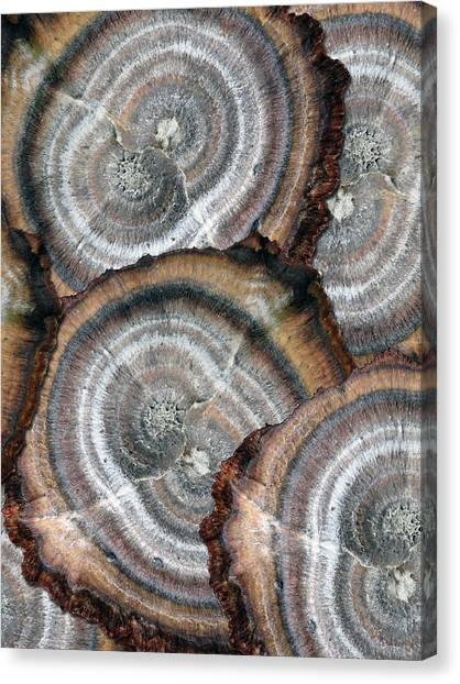 Eccentrically Concentric Canvas Print by Sue Duda