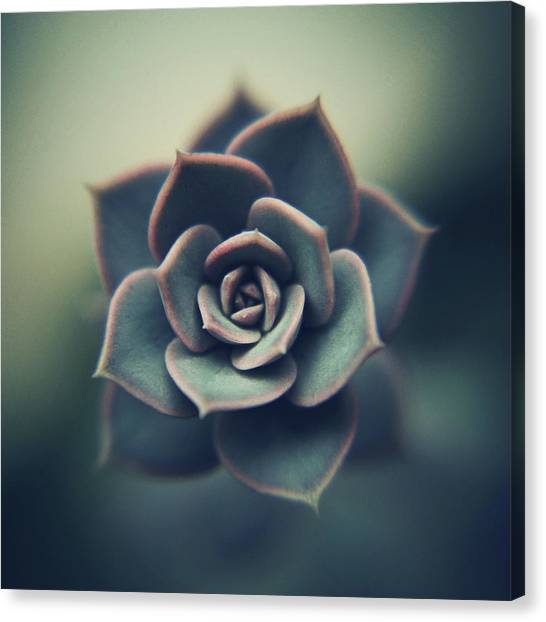 Echeveria Macro Canvas Print by Con Ryan