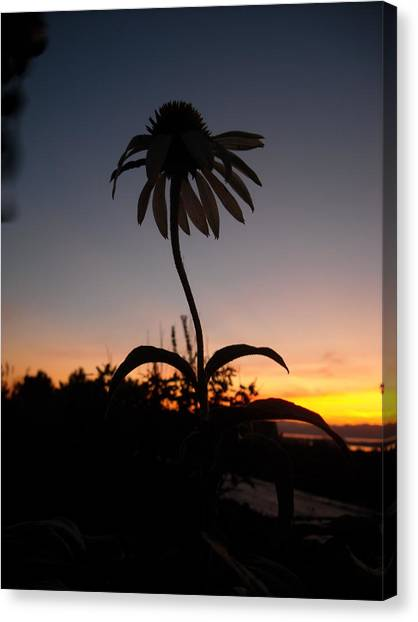 Echinacea Sunset Canvas Print