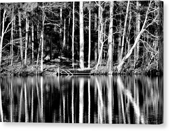 Echoing Trees Canvas Print