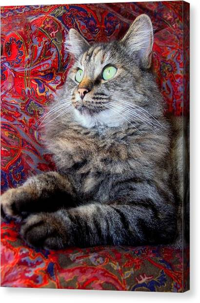 Manx Cats Canvas Print - Eclips by Kathleen Horner