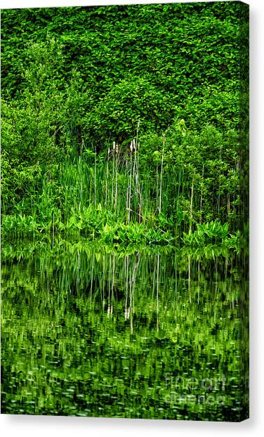 Eden 38 Oil Canvas Print