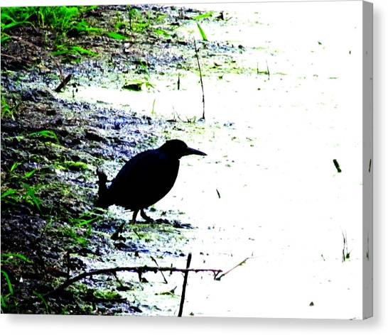 Edgar Allan Poe's Raven On The Edge Of Oblivion By Ron Tackett Canvas Print