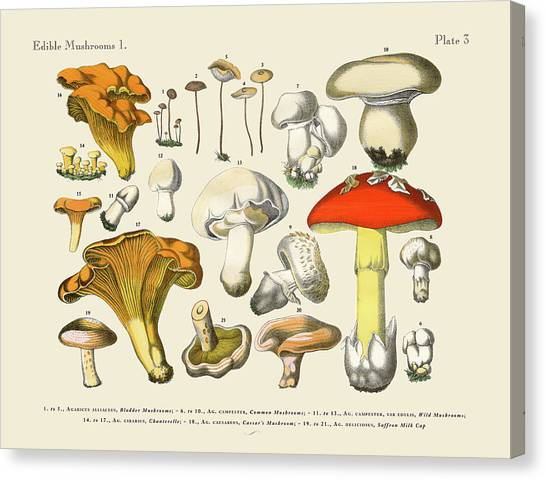 Printmaking Canvas Print - Edible Mushrooms, Victorian Botanical by Bauhaus1000
