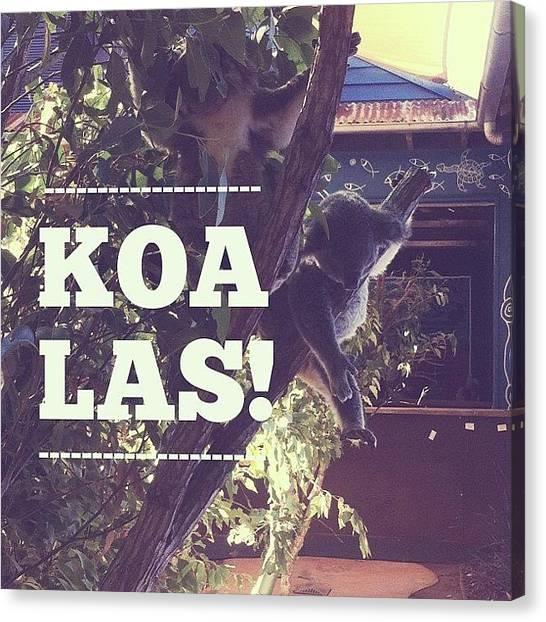 Koala Canvas Print - Eeeeee! // #koalas #cutestanimalsever by Stephanie Talbot