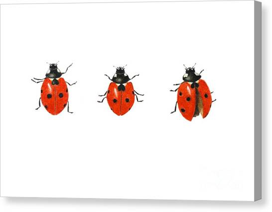 Ladybugs Canvas Print - Egn884169 by Ele Grafton