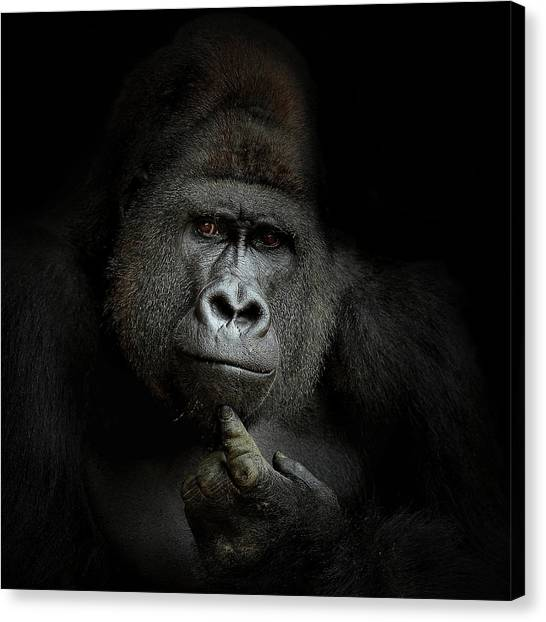 Monkeys Canvas Print - Ego Cogito, Ergo Sum by Artistname