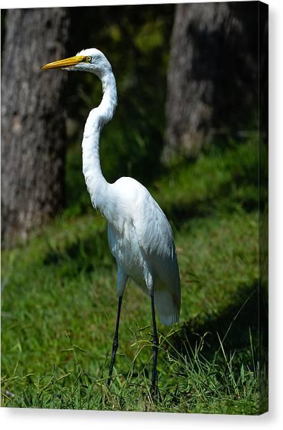 Egret - Full Length Canvas Print