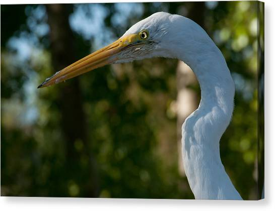 Egret #10 Canvas Print by Wiley Walker