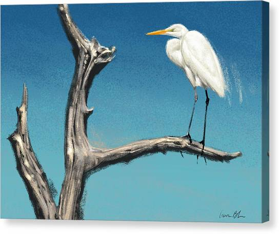 Florida Wildlife Canvas Print - Egret by Aaron Blaise