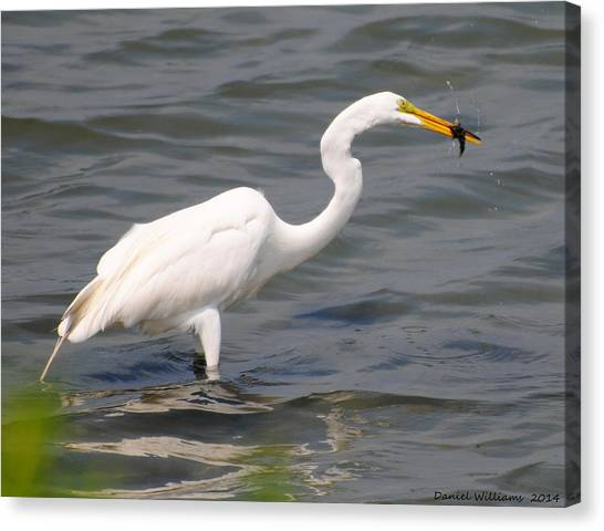 Egret At Lunch Canvas Print