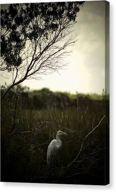 Egret At Sunset Canvas Print