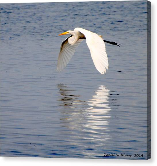 Egret Flying At Harkers Island Canvas Print