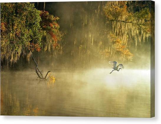 Egrets Canvas Print - Egret by Hua Zhu