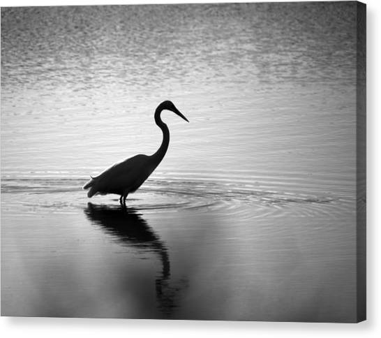 Egret In Bw Canvas Print