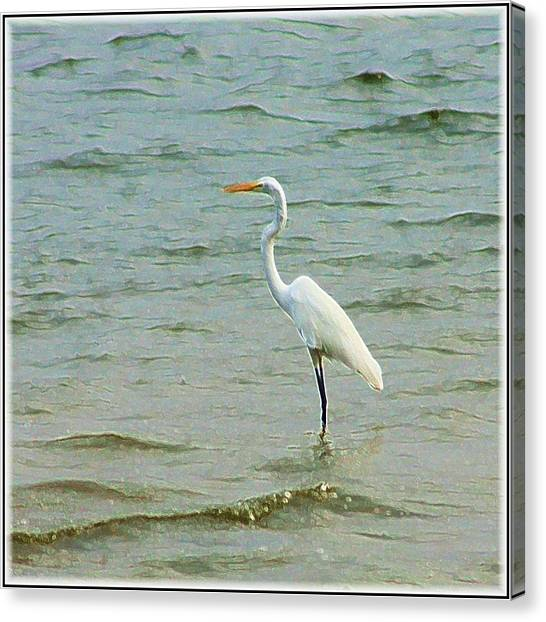 Egret In The Shallows Canvas Print