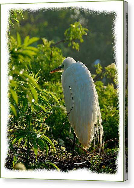 Egret Morning Canvas Print by Wynn Davis-Shanks