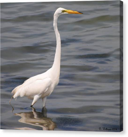 Egret On Alert Canvas Print