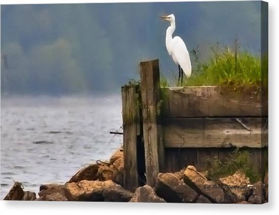 Egret On Dock Canvas Print by Bill Perry