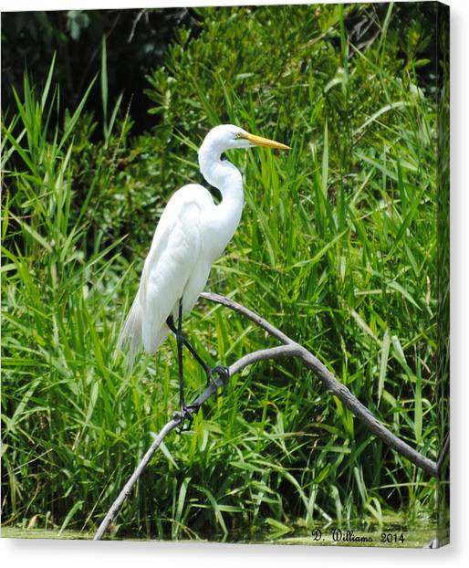 Egret Perching On Branch Canvas Print
