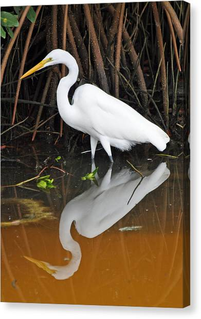 Egret Reflected In Orange Waters Canvas Print