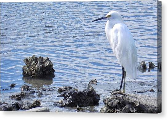 Egret Standing Perfectly Still Canvas Print