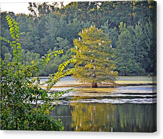 Egret Tree Canvas Print