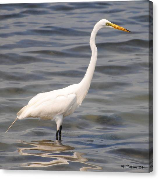 Egret Wading And Watching Canvas Print