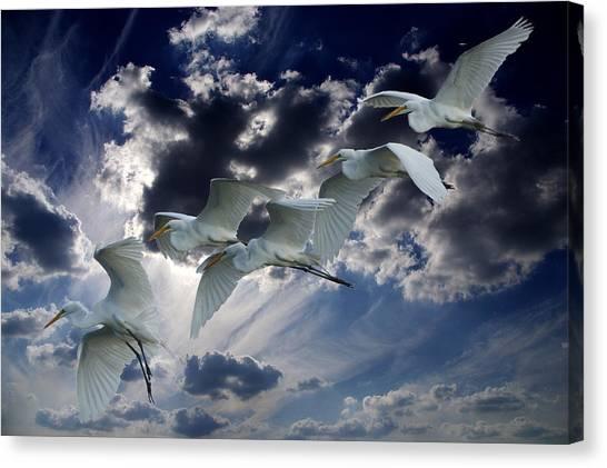 Egrets In Succession Canvas Print
