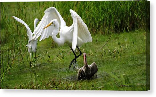 Egrets Taking Flight Canvas Print
