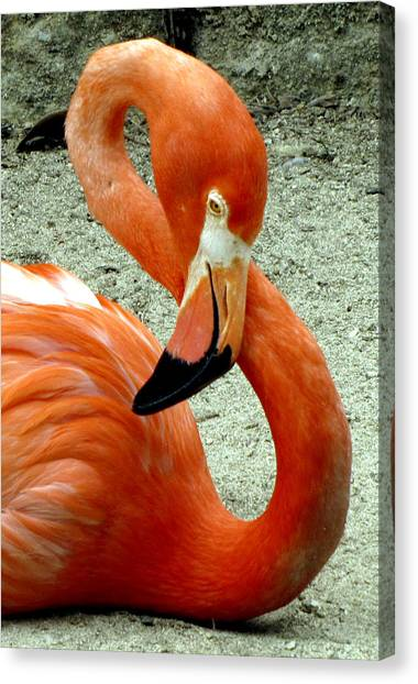 Figure Eight Flamingo Canvas Print