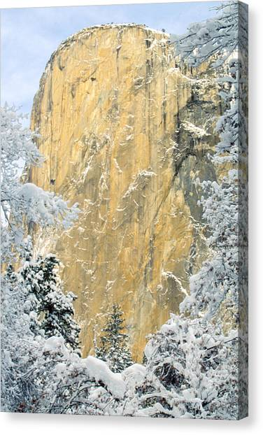El Capitan With Snowy Trees Canvas Print