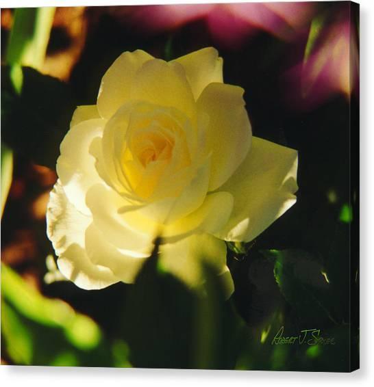El Salto Rose - Lemonwhippedcream One Canvas Print