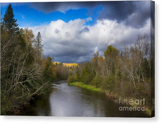 Electric Aspens Canvas Print