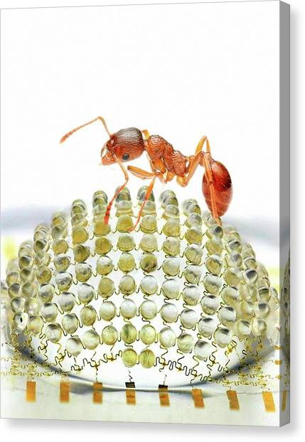 Illinois State University Canvas Print - Electronic Compound Eye With Ant by Professor John Rogers, University Of Illinois