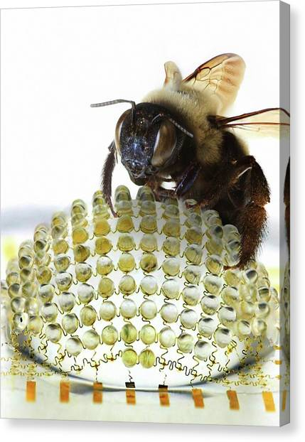 Illinois State University Canvas Print - Electronic Compound Eye With Bee by Professor John Rogers, University Of Illinois