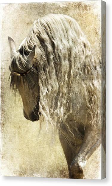 Elegance Canvas Print