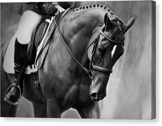 Elegance - Dressage Horse Canvas Print