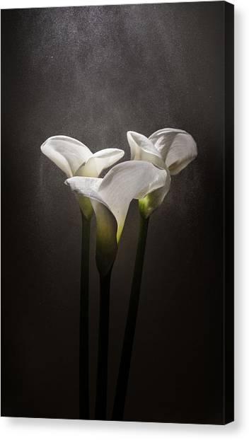 Elegance Canvas Print by Ivan Vukelic